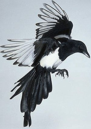kuş dövme moıdei