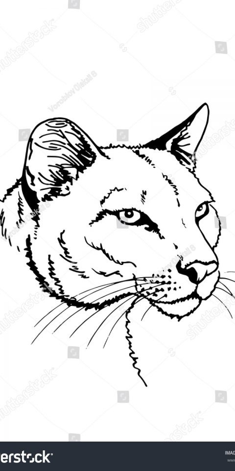 zoo tattoo desing